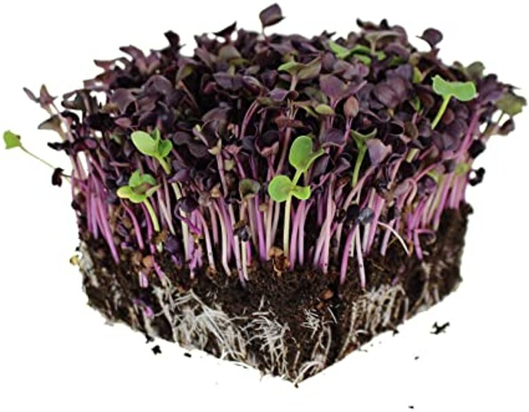 Seeds for sprouting